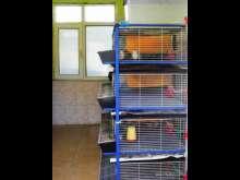 Erbaa Keklik ve Sülün Yetiştirme Çiftliği (İstasyonu)